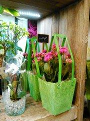 Plante_fleurie_34.jpg