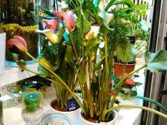 Plante_fleurie_36.jpg