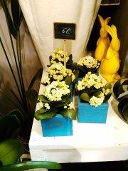 Plante_fleurie_39.jpg