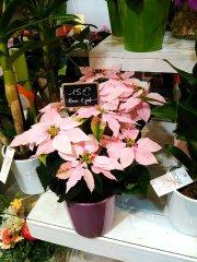 Plante_fleurie_41.jpg