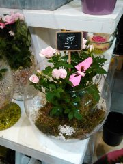 Plante_fleurie_42.jpg