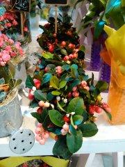 Plante_fleurie_45.jpg