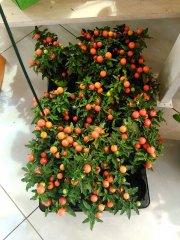 Plante_fleurie_46.jpg