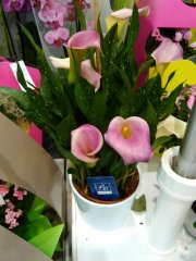 Plante_fleurie_47.jpg