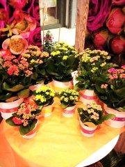 Plante_fleurie_48.jpg