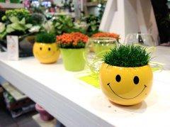 Plante_fleurie_49.jpg