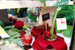 Plante_fleurie_51.jpg