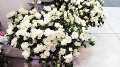 Plante_fleurie_53.jpg