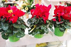 Plante_fleurie_55.jpg