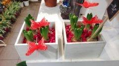 Plante_fleurie_62.jpg