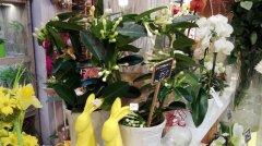 Plante_fleurie_64.jpg