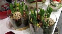 Plante_fleurie_65.jpg