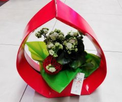 Plante_fleurie_67.jpg