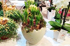 Plante_fleurie_69.jpg