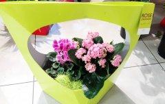 Plante_fleurie_71.jpg