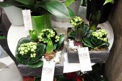 Plante_fleurie_73.jpg