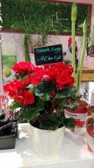 Plante_fleurie_77.jpg