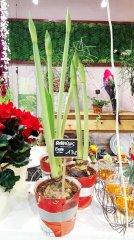 Plante_fleurie_78.jpg
