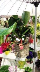 Plante_fleurie_80.jpg