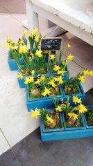 Plante_fleurie_82.jpg