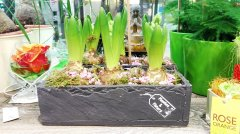 Plante_fleurie_85.jpg