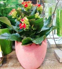 Plante_fleurie_86.jpg
