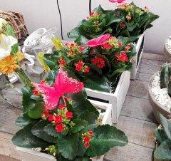 Plante_fleurie_87.jpg
