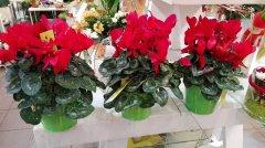Plante_fleurie_93.jpg