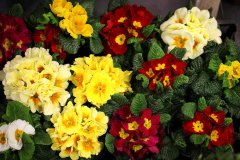 Plante_fleurie_95.jpg