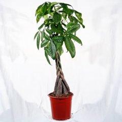Plante_verte_03.jpg