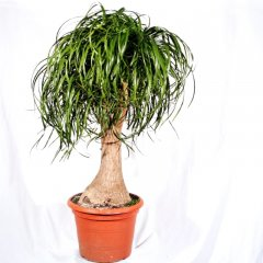 Plante_verte_04.jpg