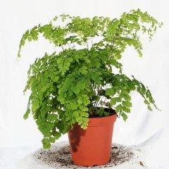 Plante_verte_05.jpg