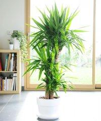 Plante_verte_06.jpg