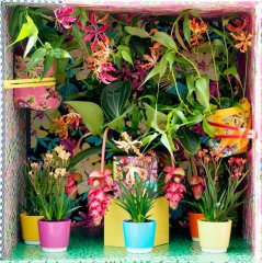 Plante_verte_10.jpg