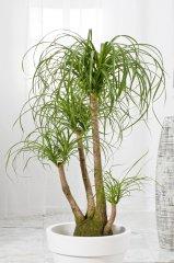 Plante_verte_14.jpg