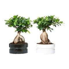 Plante_verte_18.jpg