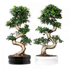Plante_verte_19.jpg
