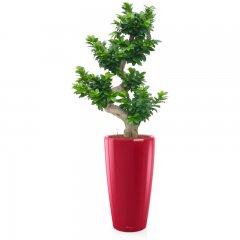 Plante_verte_20.jpg
