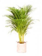 Plante_verte_22.jpg