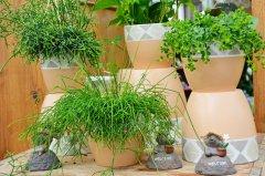 Plante_verte_23.jpg