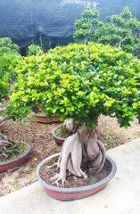 Plante_verte_25.jpg