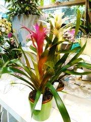 Plante_verte_27.jpg
