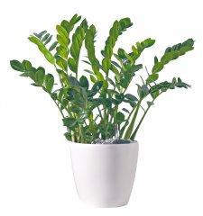 Plante_verte_33.jpg