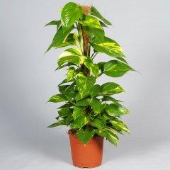 Plante_verte_35.jpg