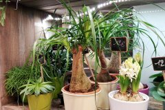 Plante_verte_37.jpg