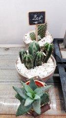 Plante_verte_40.jpg
