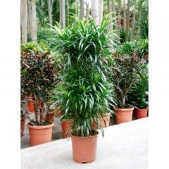 Plante_verte_41.jpg