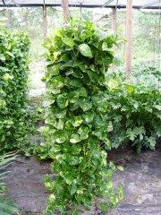 Plante_verte_42.jpg