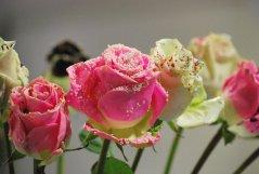 Bouquet_31.jpg