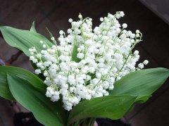 Bouquet_63.jpg